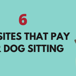 Get Paid for Dog Sitting 6 Websites that Pay